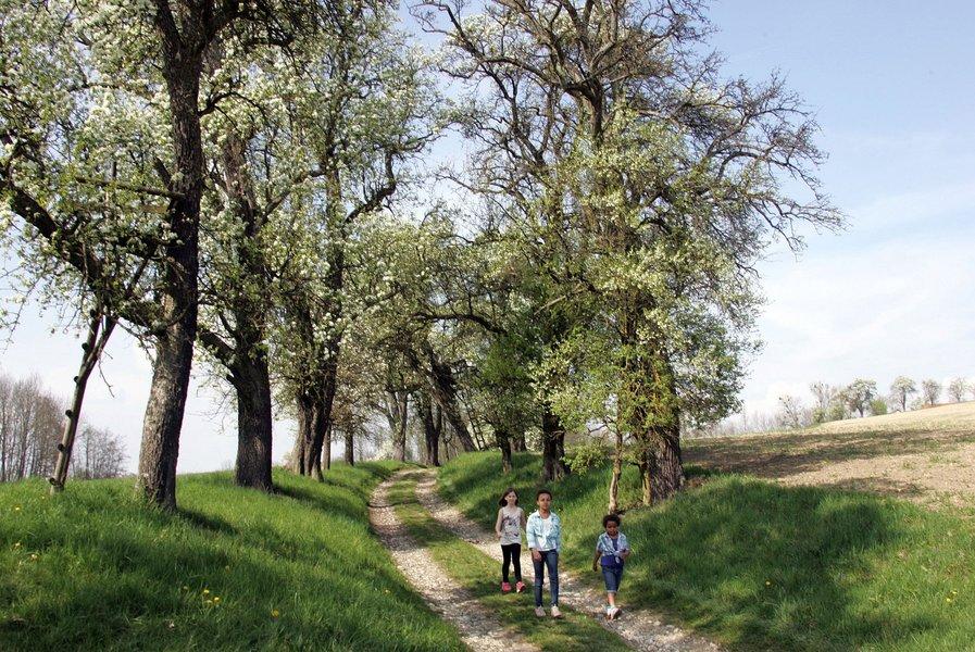 Obst Hügel Land Kirschblütenwanderung